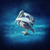 De pelikaan baadt in de regen Stock Foto's