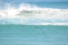 De pelikanen vliegen laag over de Golven van Boca Beach Royalty-vrije Stock Afbeelding