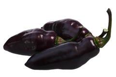 De peper C van DE Neyde Chili chinense, wegen Royalty-vrije Stock Afbeeldingen