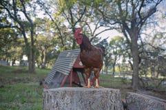 De peper de haan houdt toezicht op zijn landbouwbedrijf royalty-vrije stock foto's