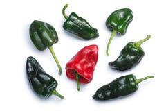 De peper van Anchopoblano, hoogste mening, wegen Stock Foto