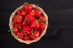De peper van de morugaschorpioen van Trinidad royalty-vrije stock afbeelding