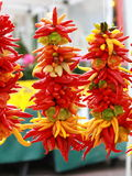 De peper van de Spaanse peper hangt op een koord. Stock Afbeelding