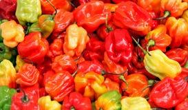 De peper van Habanero Stock Fotografie