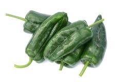 De peper van Poblano Stock Fotografie