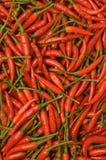 De peper van Spaanse pepers Stock Foto