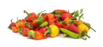 De peperpaprika van de Spaanse peper royalty-vrije stock foto's