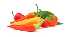De peperpaprika van de Spaanse peper stock afbeelding