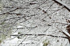 De perfecte Dag van de Winter Stock Afbeeldingen