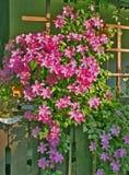 De pergola van bloemen Stock Afbeeldingen