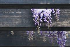 De pergola van de tuin Stock Foto's