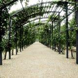 De pergola van de tuin royalty-vrije stock afbeelding