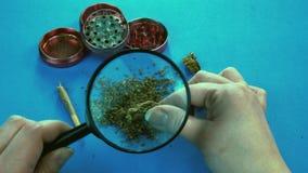 De persoon die medische marihuana bekijken ontluikt met vergrootglas Molen en marihuana de verbinding is op de achtergrond stock video