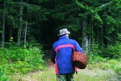 De persoon met een mand schiet in het bos als paddestoelen uit de grond stock afbeelding