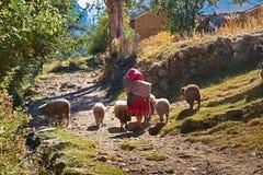 De Peruviaanse Andes Stock Afbeelding