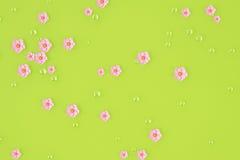 De perzik bloeit achtergrond 3D Illustratie Stock Afbeelding