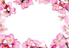 De perzik bloeit kader Stock Afbeelding