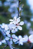 De perzikbloesem, de mooie lente, Stock Fotografie