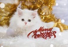 De Perzische decoratie van katjes wirh Kerstmis Royalty-vrije Stock Fotografie
