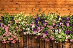 De petunia bloeit en de ooievaarsbekbloesem is bloeiend Purpere, roze, witte, gele bloei stock afbeeldingen