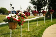 De petunia bloeit hangende manden Royalty-vrije Stock Afbeelding
