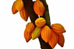 De Peulen van de cacao stock illustratie