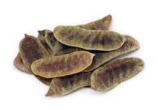 De peulen van de seneplant of acutifolia van de Kassieboom royalty-vrije stock afbeeldingen