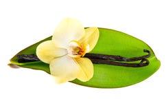 De peulen van de vanille en orchideebloem met groen blad Royalty-vrije Stock Afbeeldingen