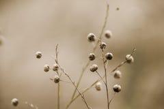 De Peulen van het bloemzaad in de Zomer stock foto's