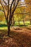 De picknick van de herfst in de aard Royalty-vrije Stock Foto