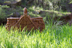De picknick van de struik Royalty-vrije Stock Foto