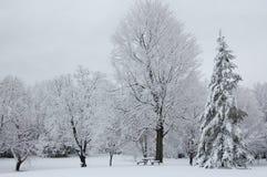 De Picknick van de winter Stock Afbeeldingen