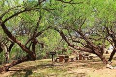 De Picknickgebied van Gr Bosquecito in het Kolossale Park van de Holberg royalty-vrije stock fotografie