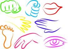 De pictogrammen van de anatomie vector illustratie