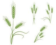 De pictogrammen van de tarwe vector illustratie