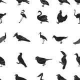 De pictogrammen van het vogelpatroon in zwarte stijl Grote inzameling van de voorraadillustratie van het vogel vectorsymbool Royalty-vrije Stock Afbeelding