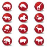 De pictogrammen van wilde dieren Stock Afbeeldingen