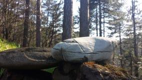 De piedra blanco profundamente en el bosque imagenes de archivo