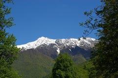 De piek en het bos van de sneeuw Royalty-vrije Stock Foto
