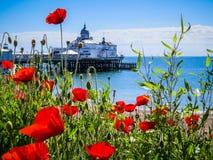 De pijler en de papavers van Eastbourne stock fotografie