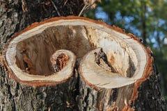 De pijler van de besnoeiingsboom Close-uphart gevormde plak stock foto's