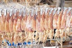 De pijlinktvis hangt op de lijn Stock Foto's