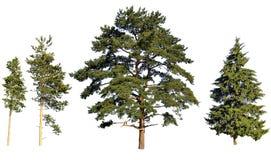 De pijnbomen en de spar van de boom Royalty-vrije Stock Afbeeldingen