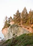 De Pijnbomen van Californië Stock Fotografie
