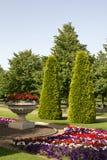De pijnbomen van het Park van regenten royalty-vrije stock afbeeldingen