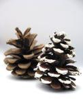 De pijnbomen van Kerstmis Stock Foto's