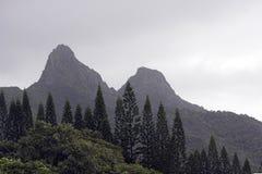 De Pijnbomen van Norfork in de Mist Stock Foto's