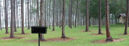 De Pijnbomen van Panoraminc in Regen Stock Afbeeldingen