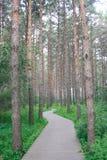 De pijnboom bosweg Stock Afbeelding