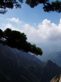 De pijnboom in Huangshan in China Royalty-vrije Stock Foto